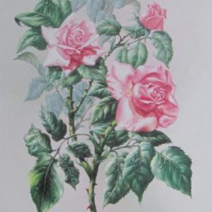 Bouquet roses 3d