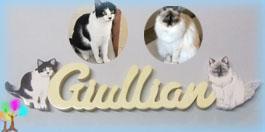 Plaque de porte prenom lettres bois chats